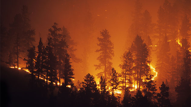 Electricity cut for hundreds of thousands in California to help reduce wildfire risk