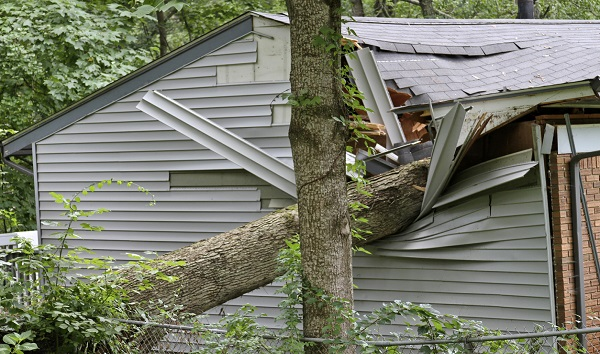 Fallen tree crashes through Washington home, just missing mom and 1-month-old